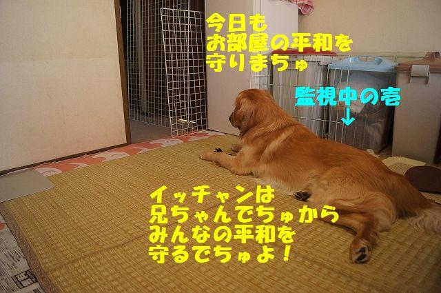 1_20130313051233.jpg