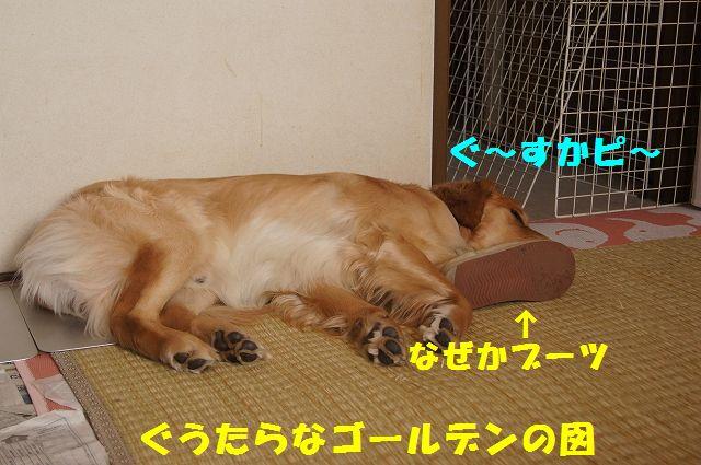 1_20130313164227.jpg