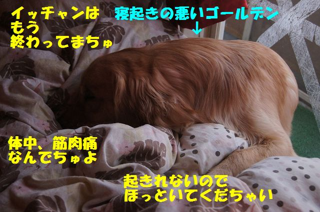 1_20130319014412.jpg