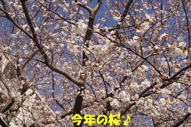1_20130322152334.jpg