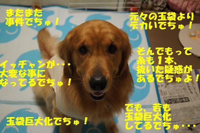 1_20130326212622.jpg