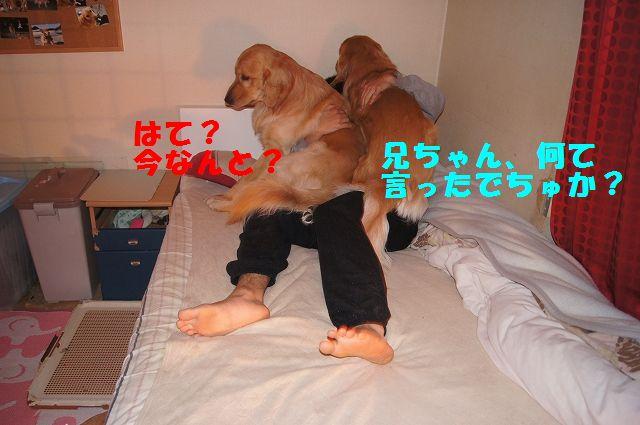 2_20130204031720.jpg