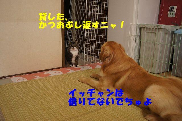 2_20130305045754.jpg