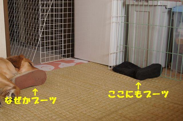 2_20130313164229.jpg