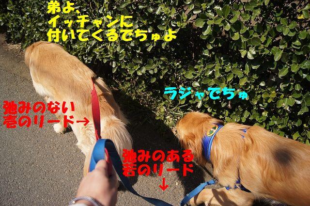 2_20130319014413.jpg