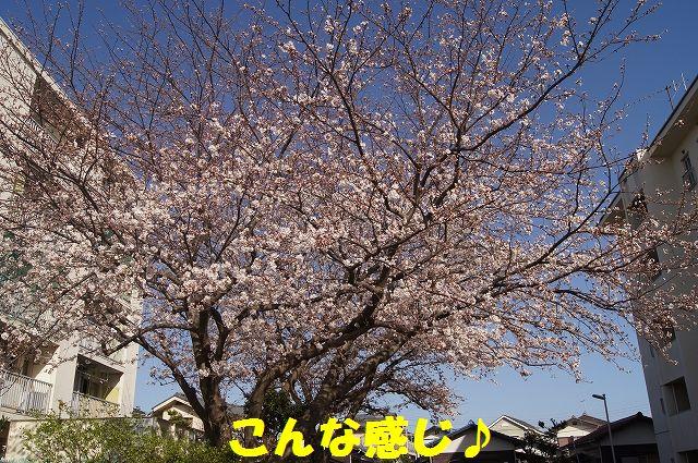 2_20130322152335.jpg