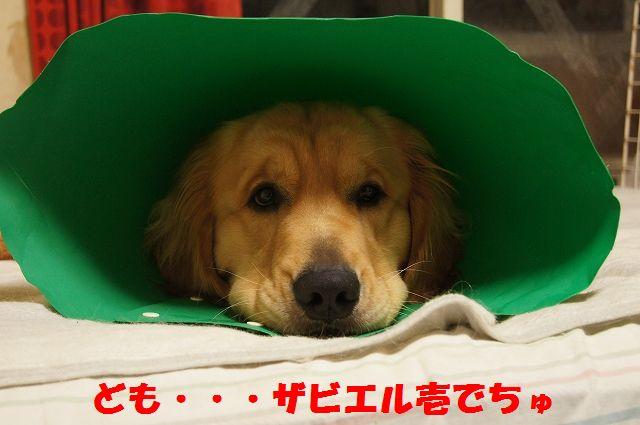 2_20130326212625.jpg