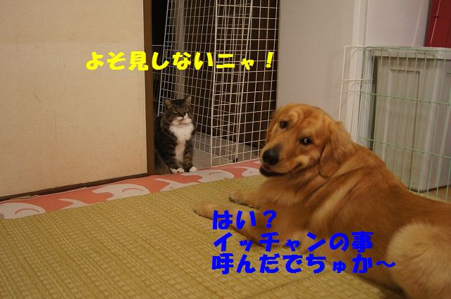 3_20130305045755.jpg