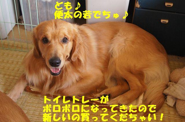 3_20130307185200.jpg