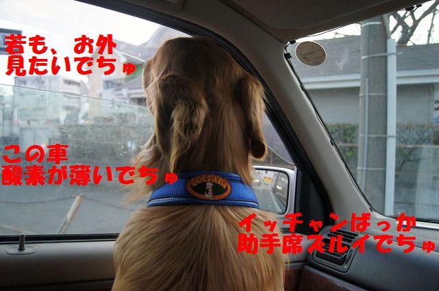3_20130308223252.jpg