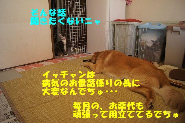 3_20130313051236.jpg