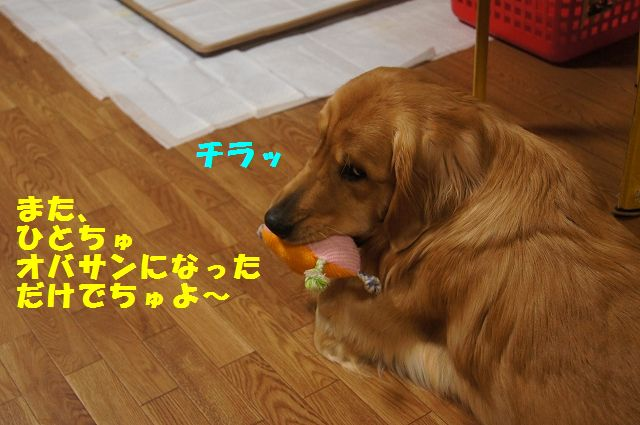 3_20130314231618.jpg