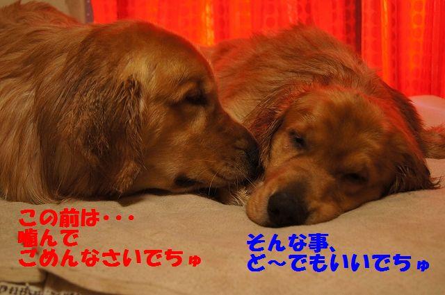3_20130320215152.jpg