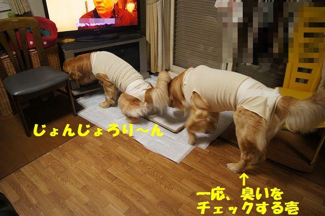 3_20130322152336.jpg
