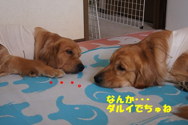 3_20130324045731.jpg