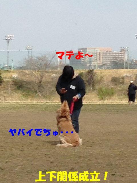 3_20130325101822.jpg