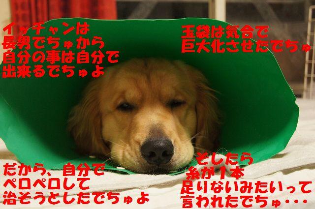 3_20130326215429.jpg