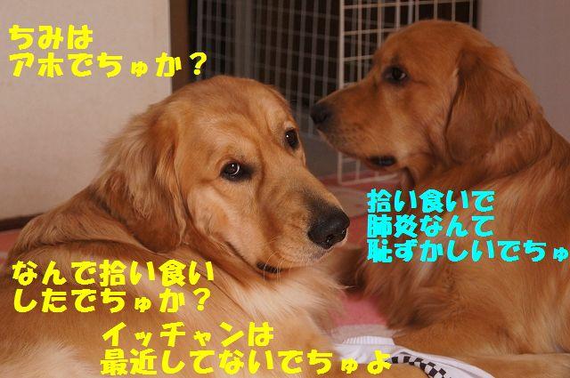 4_20130208185829.jpg