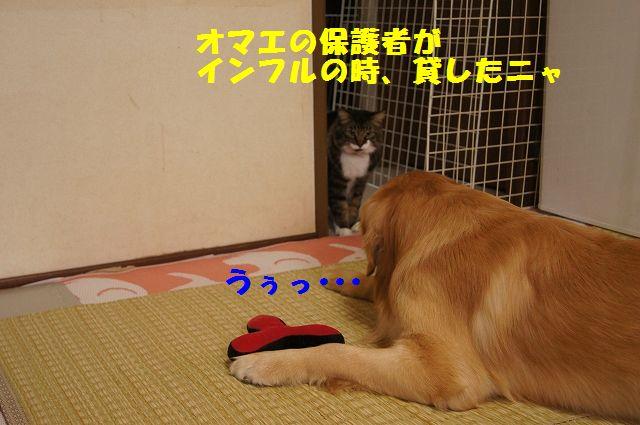 4_20130305045756.jpg