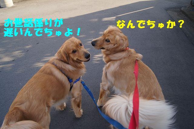 4_20130307013351.jpg