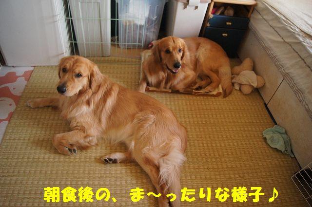 4_20130307185201.jpg