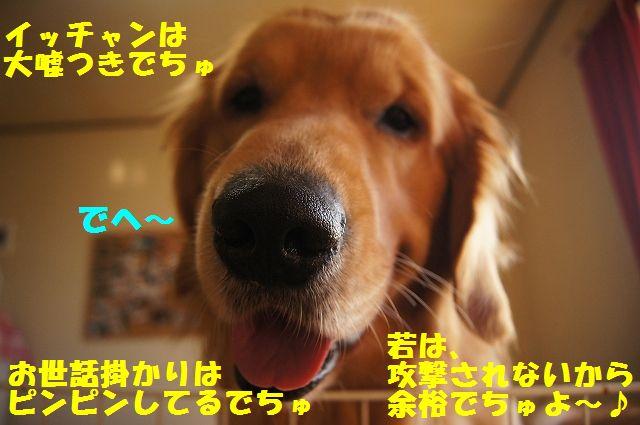 4_20130313051237.jpg