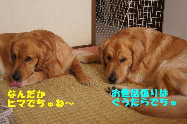 4_20130313164231.jpg