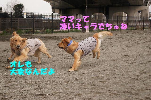 4_20130316193644.jpg