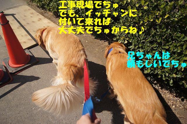 4_20130319014415.jpg