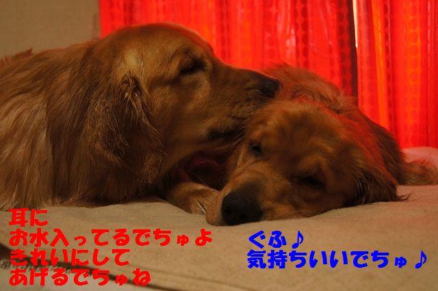 4_20130320215153.jpg