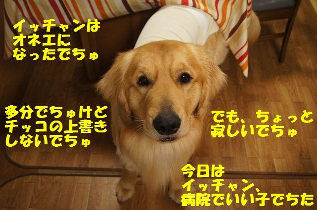 4_20130322152337.jpg