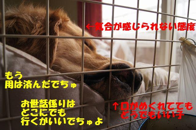 4_20130325083800.jpg
