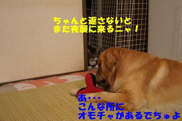 5_20130305045757.jpg