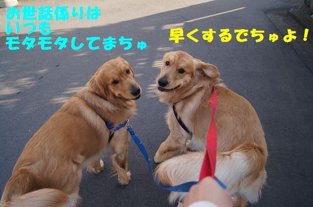 5_20130307013353.jpg