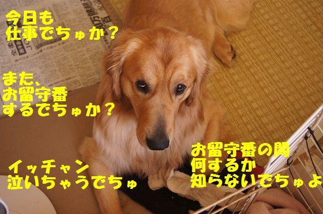 5_20130307185202.jpg