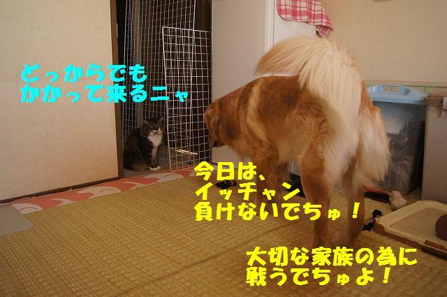5_20130313051238.jpg