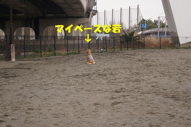 5_20130315170224.jpg