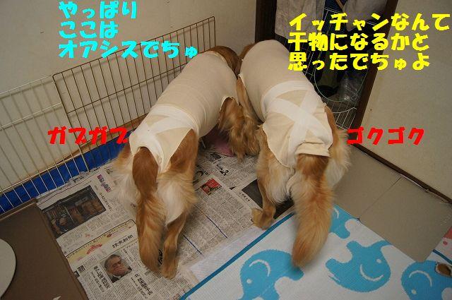 5_20130322152338.jpg