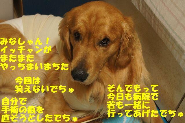 5_20130324045733.jpg