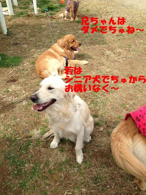 5_20130325101825.jpg