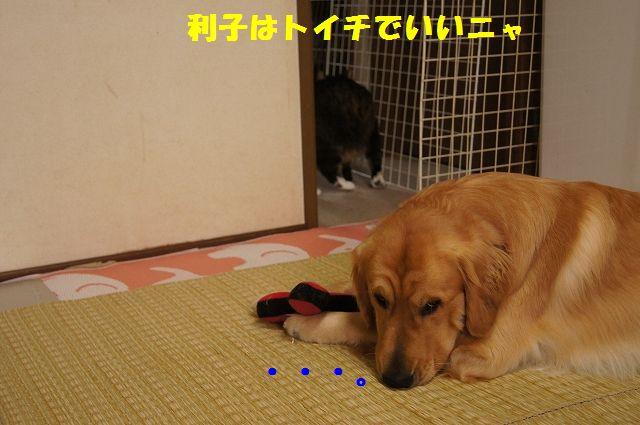 6_20130305045814.jpg