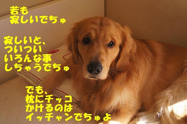 6_20130307185251.jpg