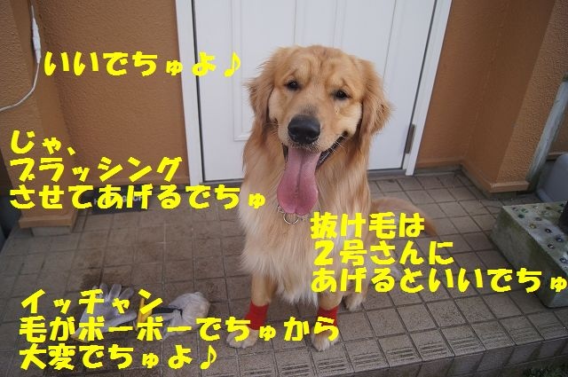 6_20130313164243.jpg