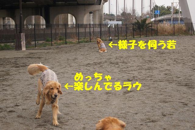 6_20130315170225.jpg