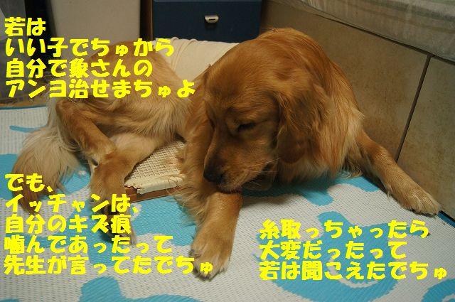 6_20130324050340.jpg