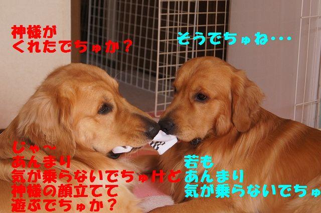 7_20130208185842.jpg