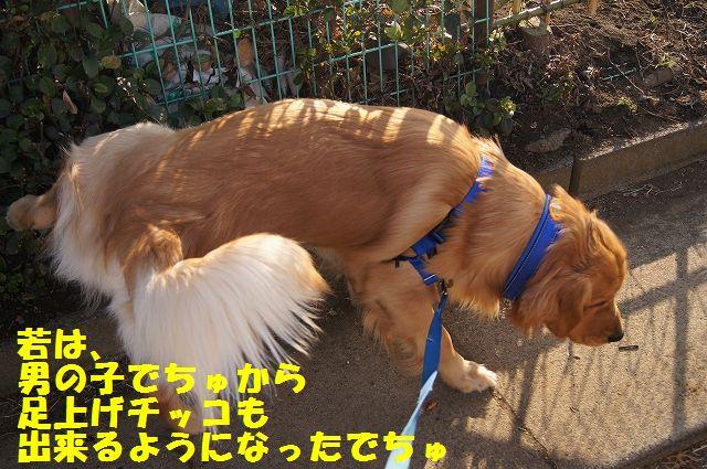 7_20130307013408.jpg