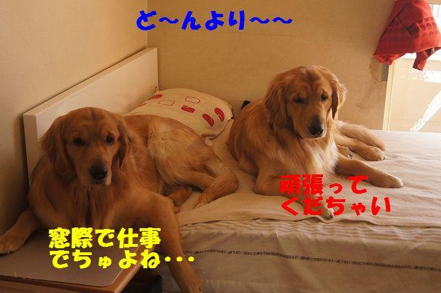 7_20130307185252.jpg