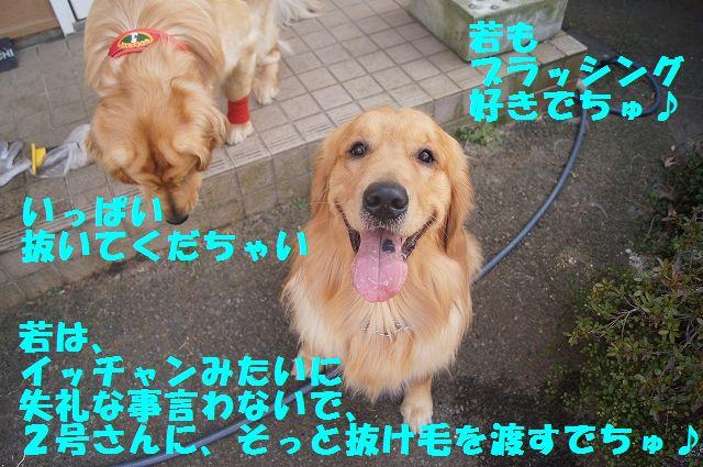 7_20130313164244.jpg