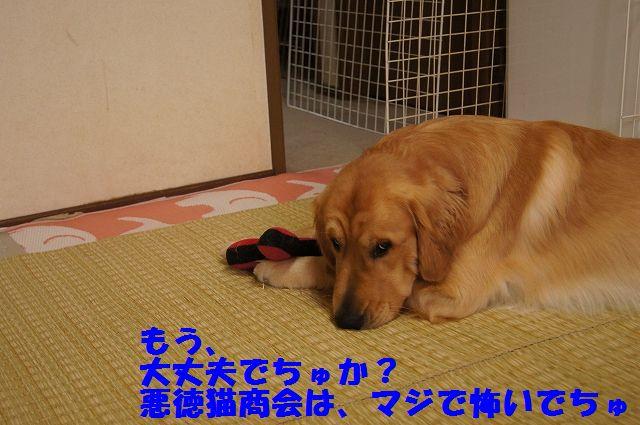 8_20130305045816.jpg